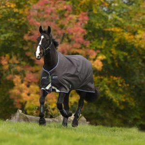 Amigo Bravo12 Pony