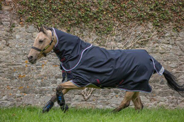 Horsewar Amigo Pony